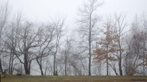 Trees in fog at Arlington Reservoir