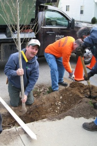 DPW planting a tree in Town