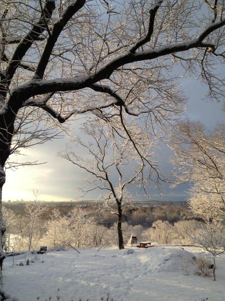 Trees_Snow