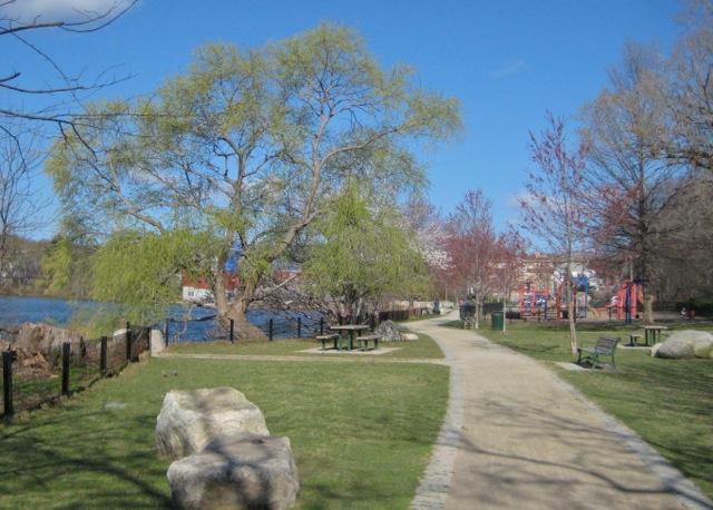 Willow on Spy Pond